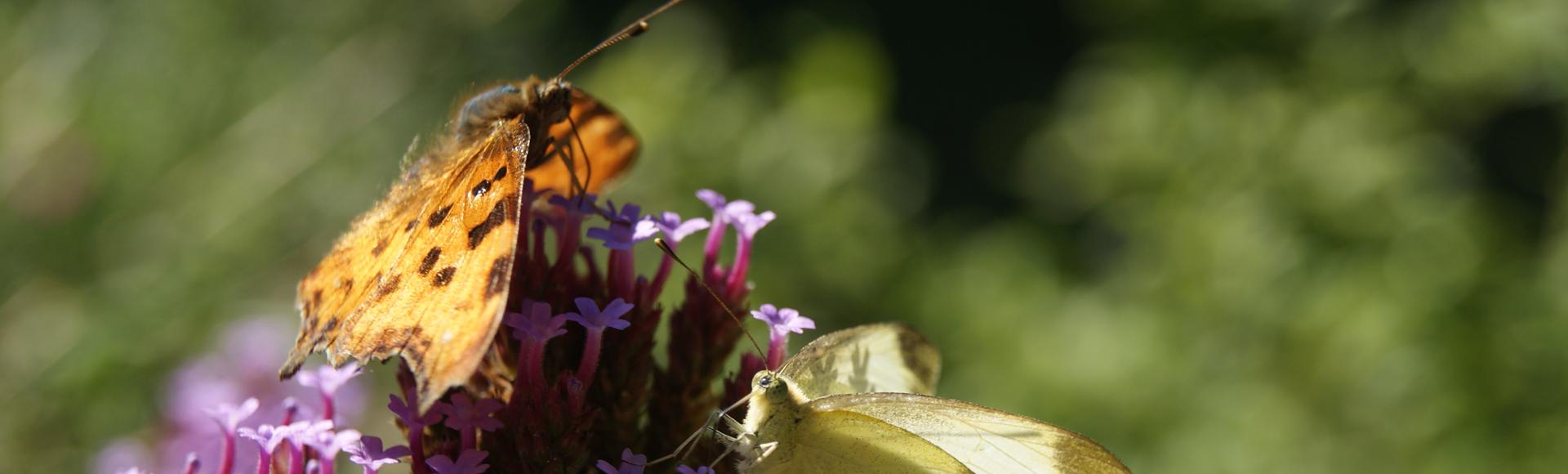 Préserver les ressources et favoriser la biodiversité